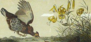John J. Audubon book